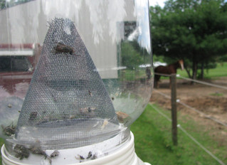 Don't Let Summer Insects Endlessly Bug Your Horse!