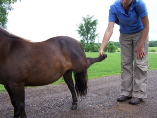 Why Your Healthy Horse Needs An Exam