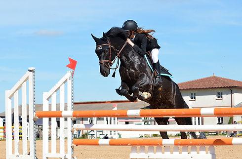 horse-721136_1920.jpg