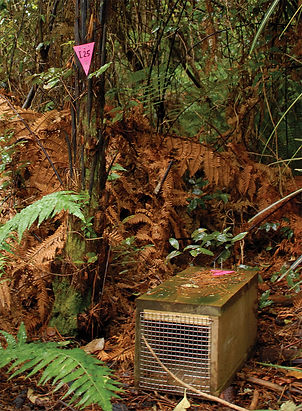 Rat trap and pink triangle marker at Ulva Island, near Stewart Island, New Zealand