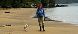 Gadget (rodent detector dog) with her handler at Ulva Island