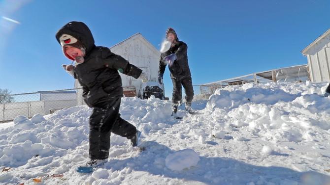 It's a blizzard. Where will the peachicks go?