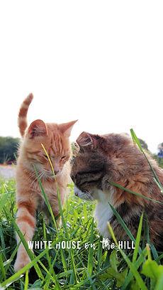 Wallpaper.4.Cats.jpg