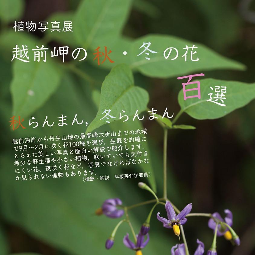 植物写真展「越前秋・冬の花百選」 (1)