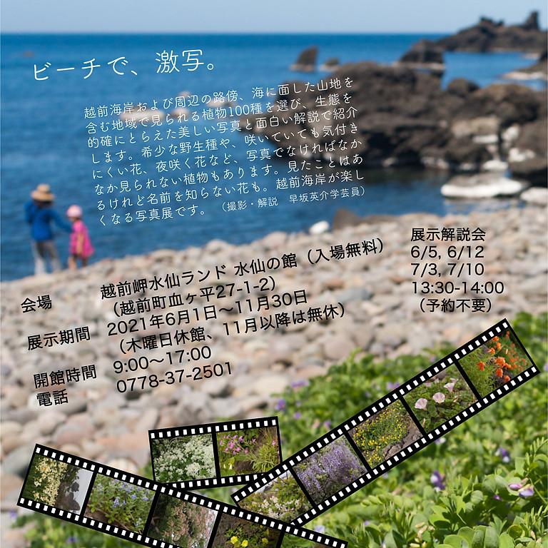 植物写真展「越前海岸の花百選」
