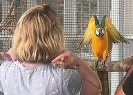 Jo Traning a Macaw