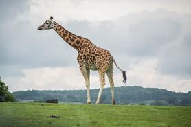 Safari (8).jpg
