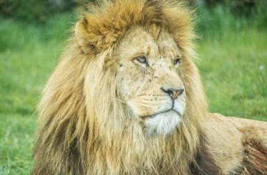 Safari (12).jpg