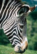 Safari (6).jpg