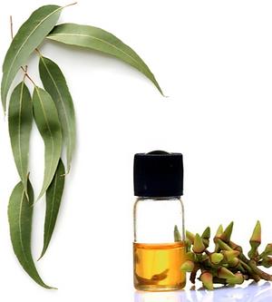 eucalyptus-oil-500x500.png