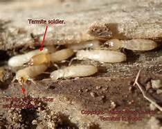 IMPACT-Termites, ICF vs CMU