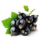 black-currant-250x250.jpg