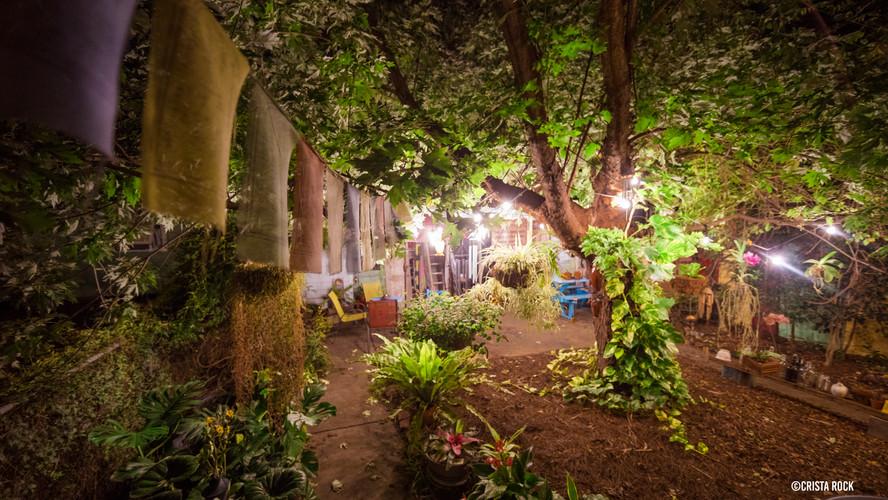 backyard_3.jpg