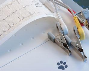 Equipamento de eletrocardiografia