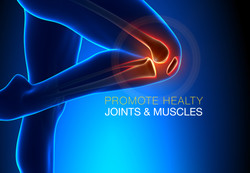 2-Dollarphotoclub_50652942-joints-muscles