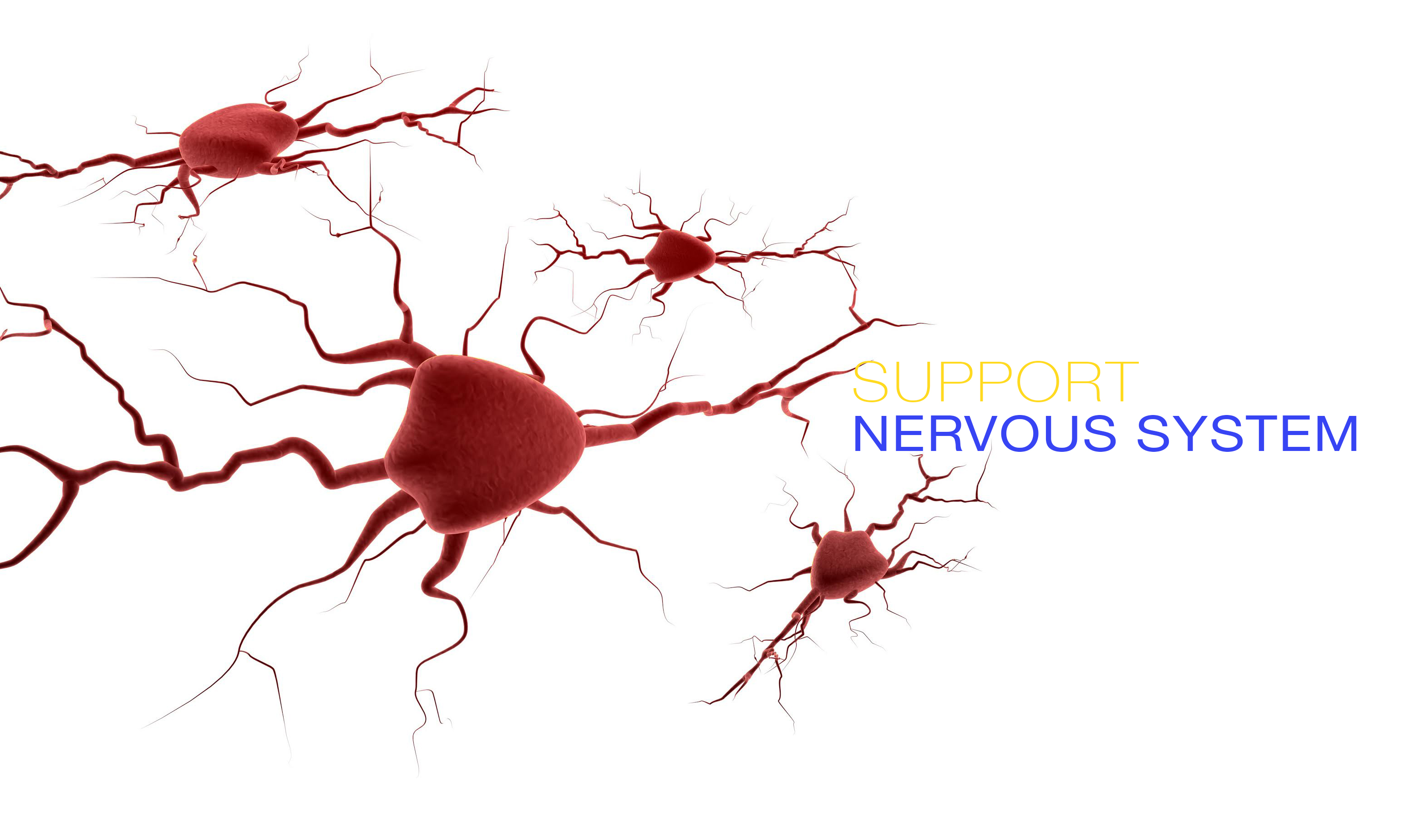 Nervous system done - 1