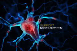 Nervous-system-Dollarphotoclub_78088104