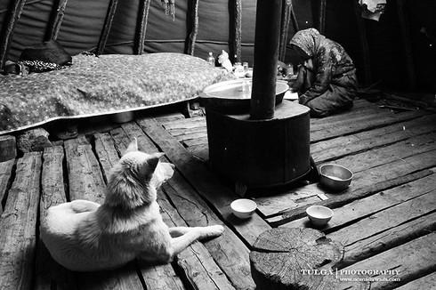 taiga dogs5.jpg