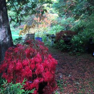Red bush.jpg