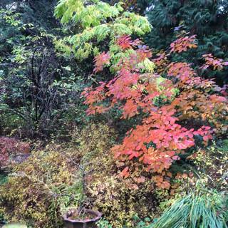 Fall garden.jpg