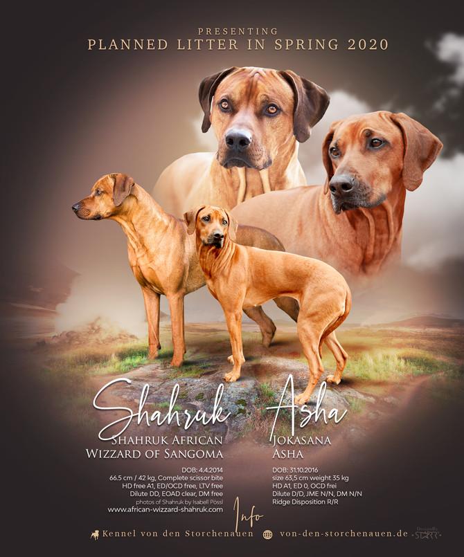 Shahruk & Asha