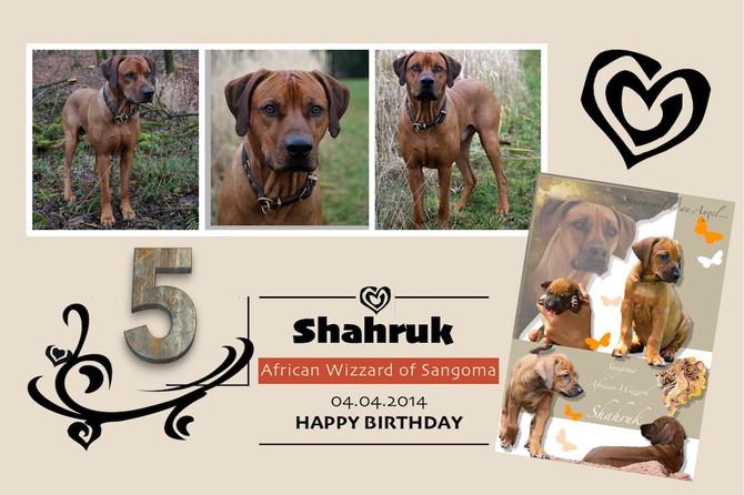 HAPY BIRTHDAY SHAHRUK