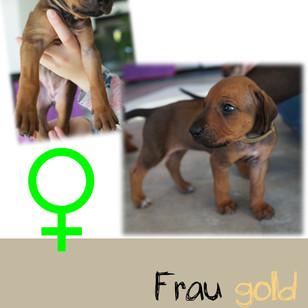 Frau_gold_4 Wochen