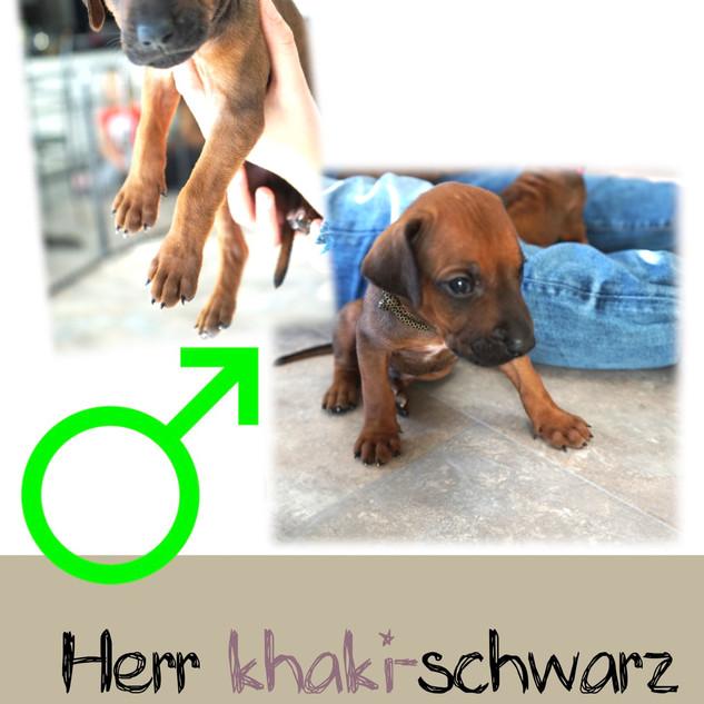 Herr_khaki-schwarz_4 Wochen