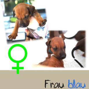 Frau_blau_4 Wochen