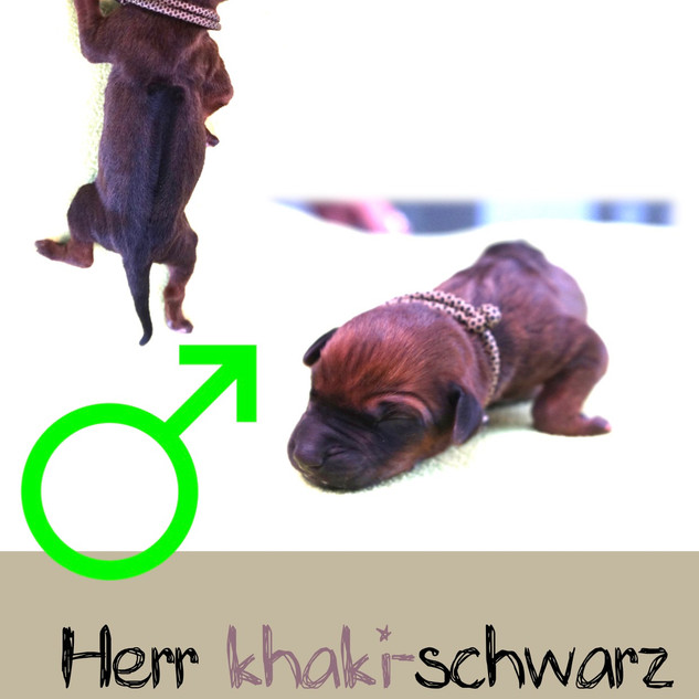 Herr_khaki-schwarz.jpeg