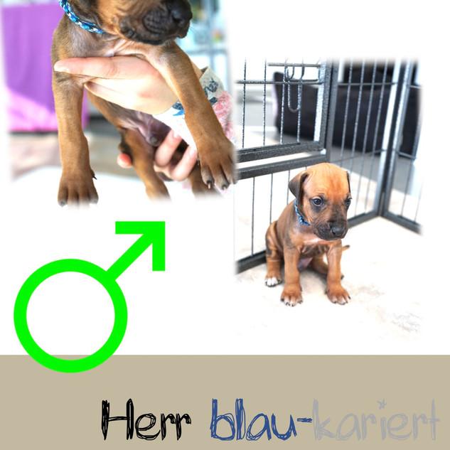 Herr_blau-kariert_4 Wochen