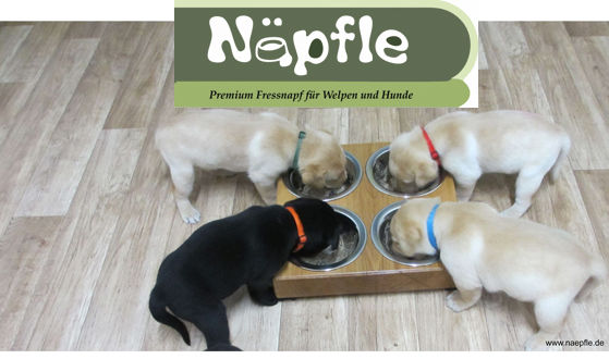 LogoWebsite_Naepfle.jpg