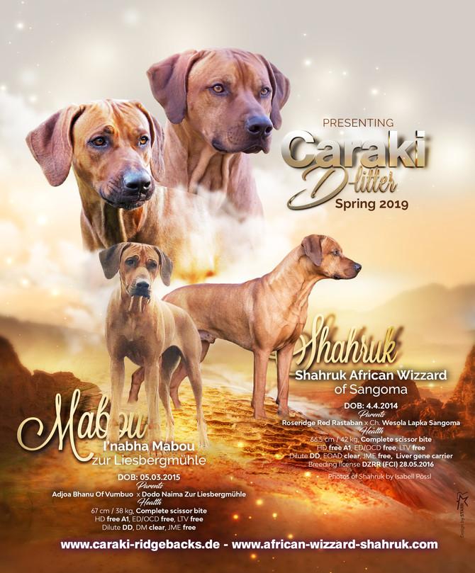 Shahruk x Mabou
