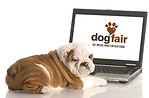 DogFair_Laptop.jpg