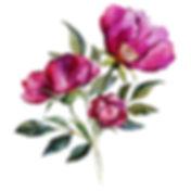 Pink small 3.jpg