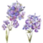 Purple small 4.jpg