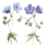 Purple small.jpg