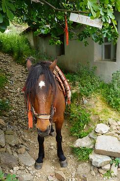 Horse%20ride_edited.jpg
