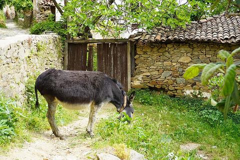 Sirince Donkey.JPG