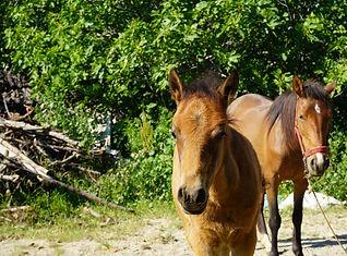Sirince Horses.JPG