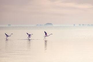 pixabay birds.jpg