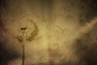Pixabay Wind.jpg