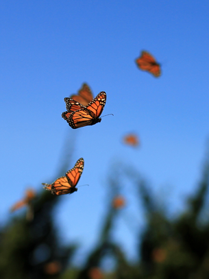 Be the Monarch: Build Your Own Kaleidoscope