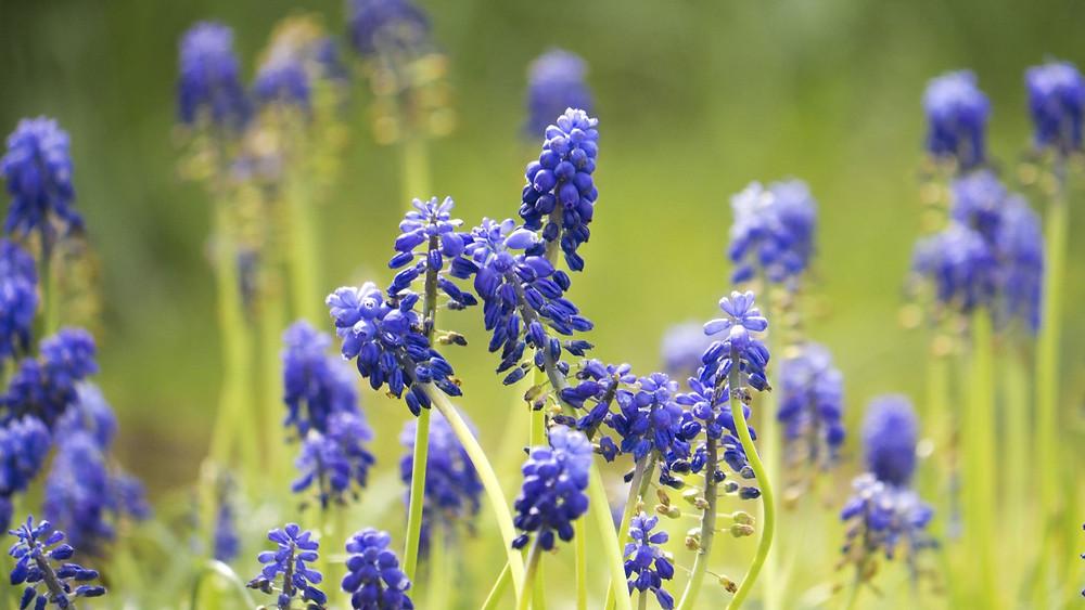 Tuft of Flowers