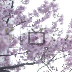4-video-03.jpg