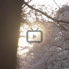 4-video-02.jpg