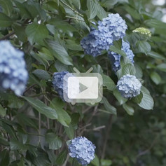 4-video-04.jpg