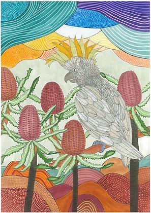 'Sylvio the Sulphur-crested Cockatoo' | Aggie Dolan