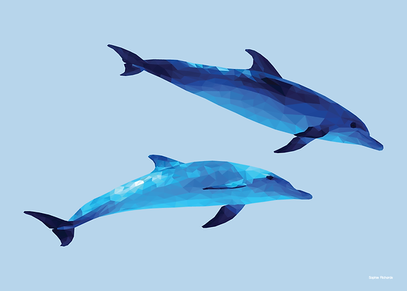 Dolphins | Sophie Gibcus