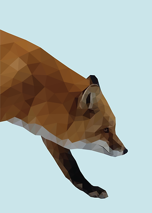 Fox | Sophie Gibcus